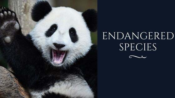 why endangered species are important