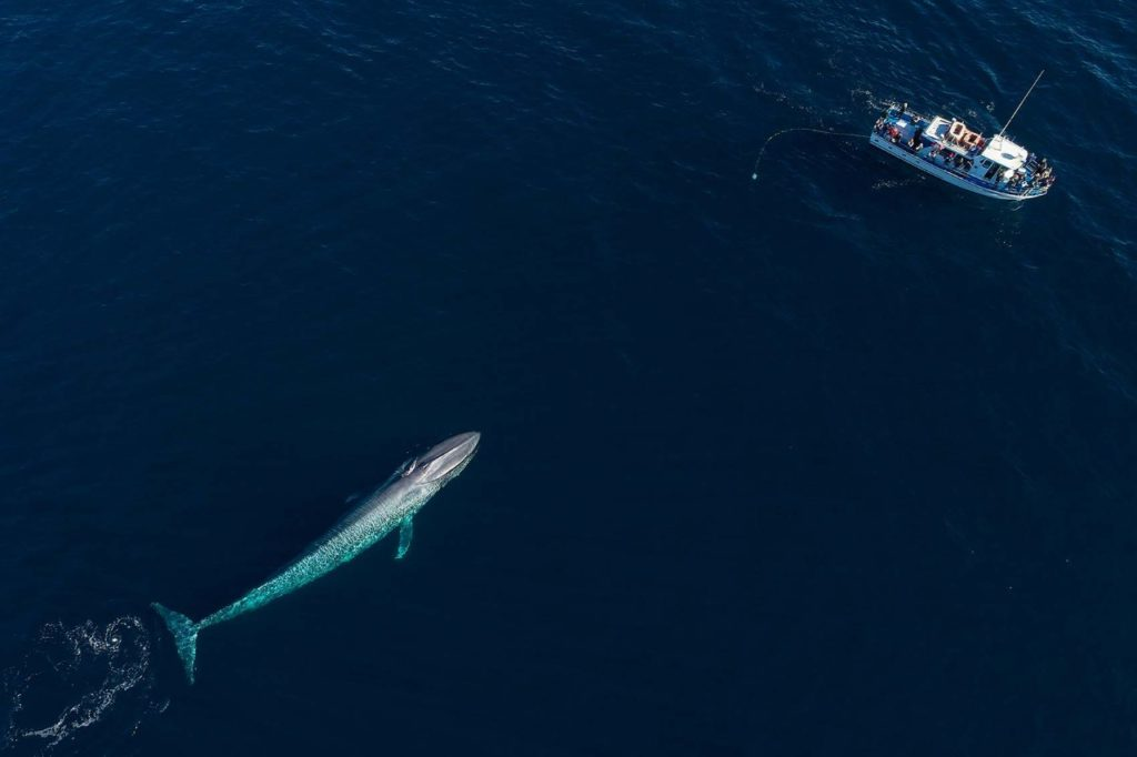 facts about blue whale