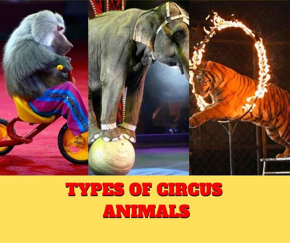 Types of circus animals