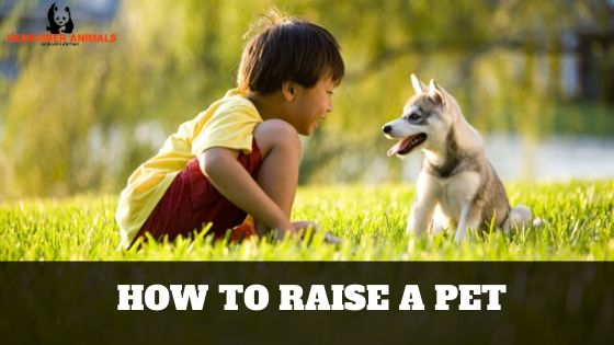 HOW TO RAISE A PET