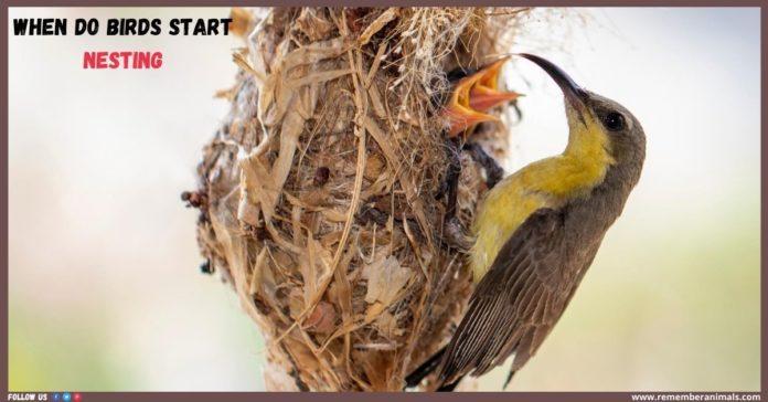 • when do birds start nesting