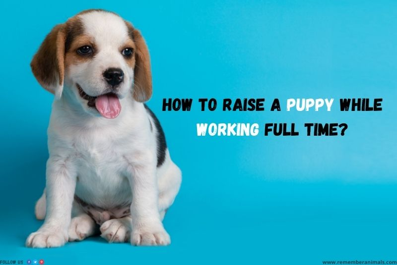 raising a puppy with a full-time job