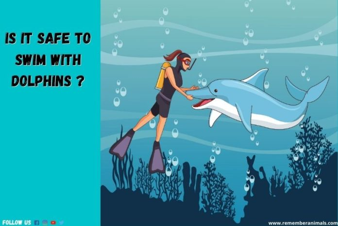 is it safe to swim with dolphins ?