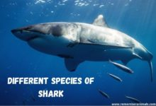 shark species list