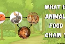 what is animal food chain