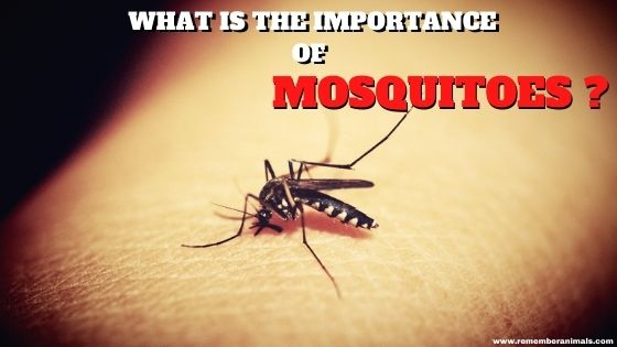Importance of mosquitoes in nature