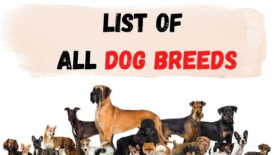 dog breed information