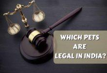 LEGAL PET ANIMALS IN INDIA