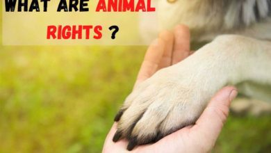 animal rights meaning