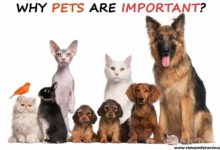 the importance of having a pet